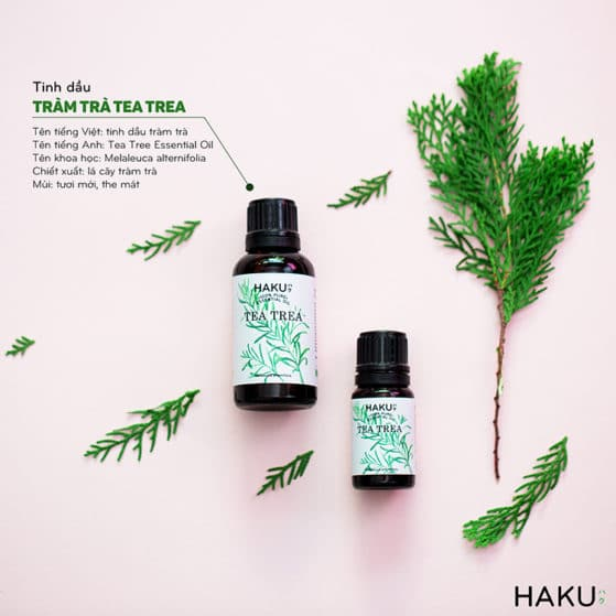 gioi thieu ve tinh dau tram tra tea tree essential oil