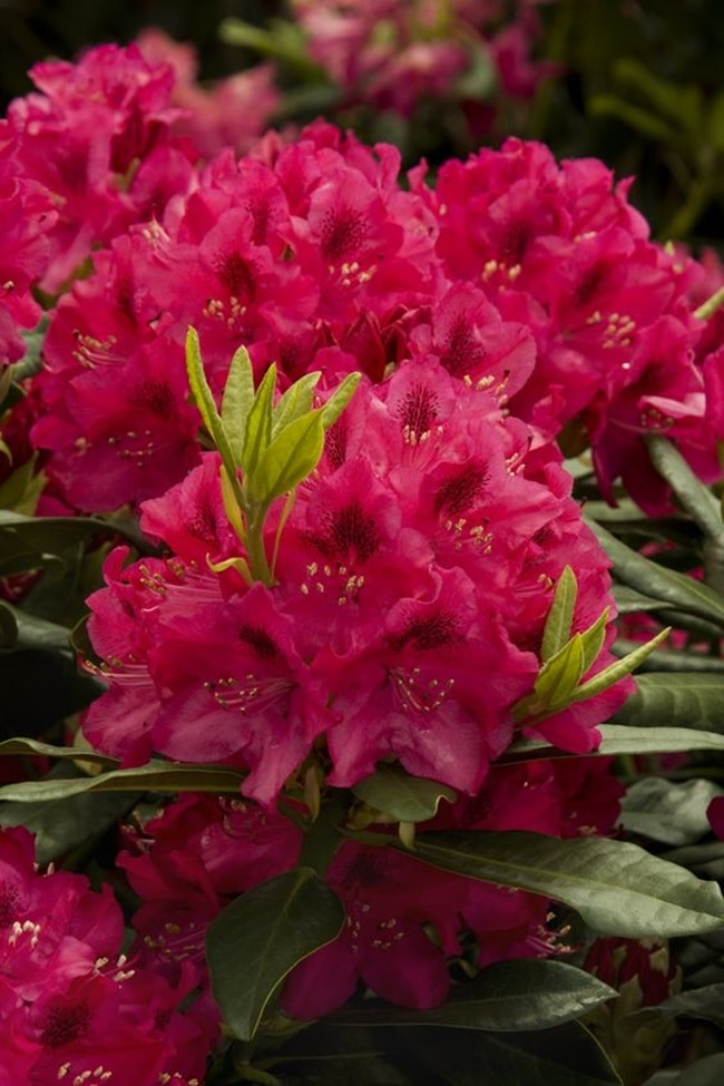 y nghia cua hoa do quyen 2