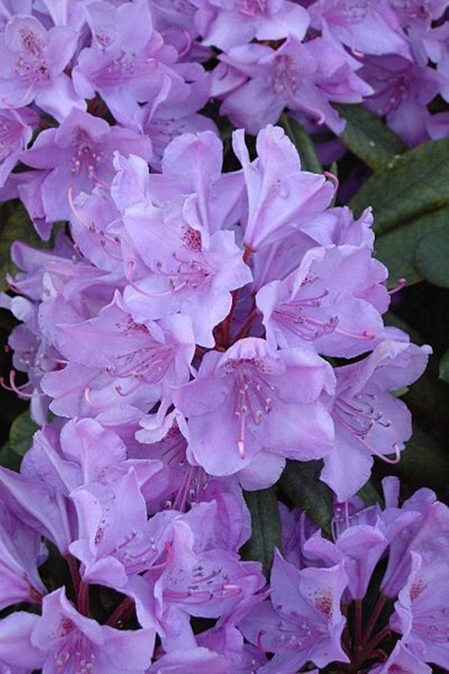 y nghia cua hoa do quyen 3