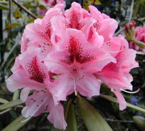 y nghia cua hoa do quyen 4