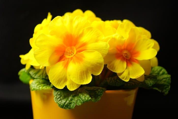 dau hoa anh thao 1