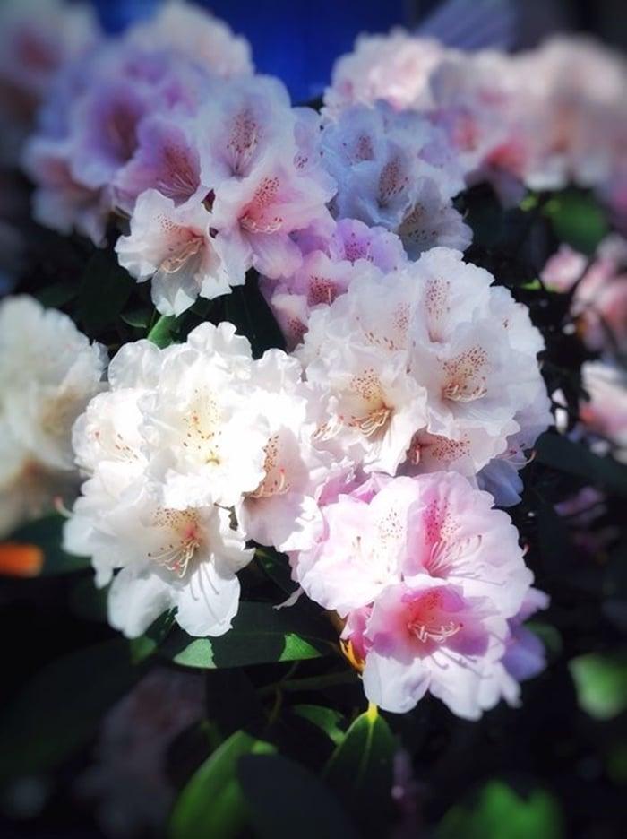 kinh nghiem trong hoa do quyen 10