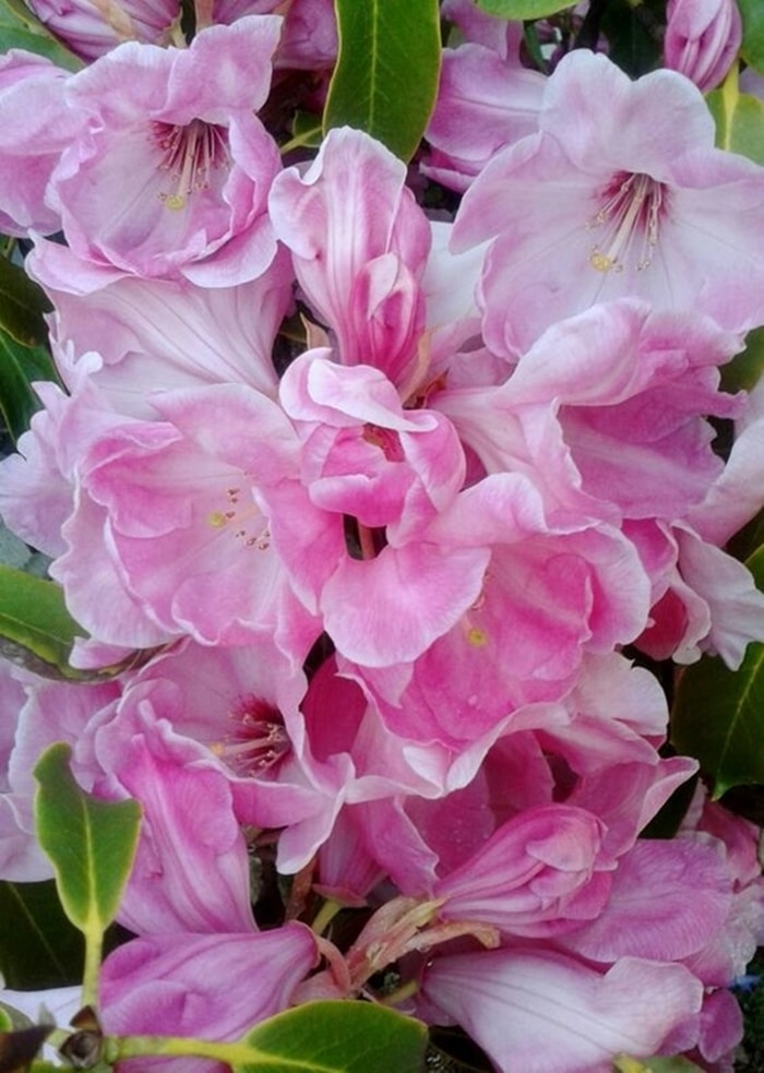 kinh nghiem trong hoa do quyen 4