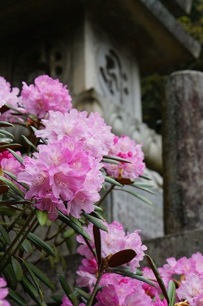 kinh nghiem trong hoa do quyen 7