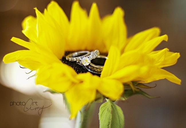 hoa huong duong bieu tuong cua tinh yeu chung thuy