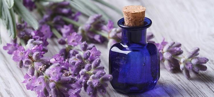 Tinh dau hoa oai huong lavender nguyen chat