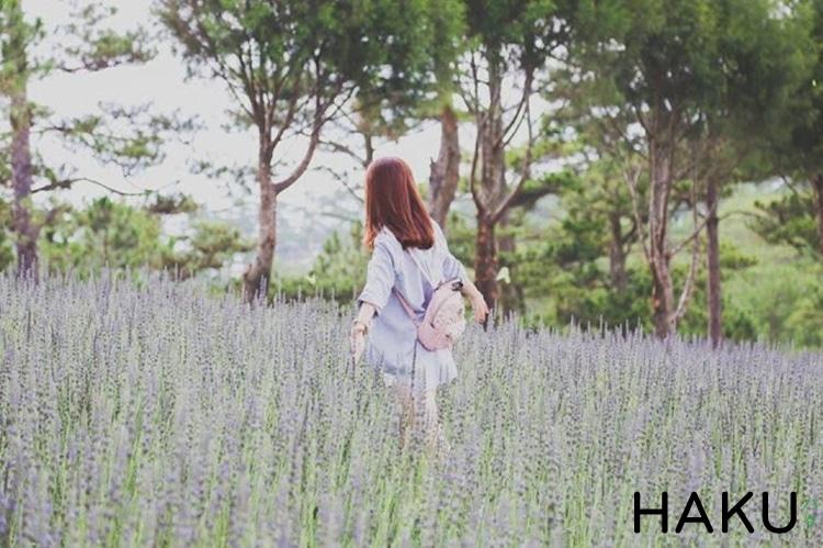 canh dong hoa oai huong lavender o thung lung tinh yeu da lat