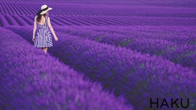 hinh anh cac loai hoa lavender va cach phan biet cac dong hoa lavender