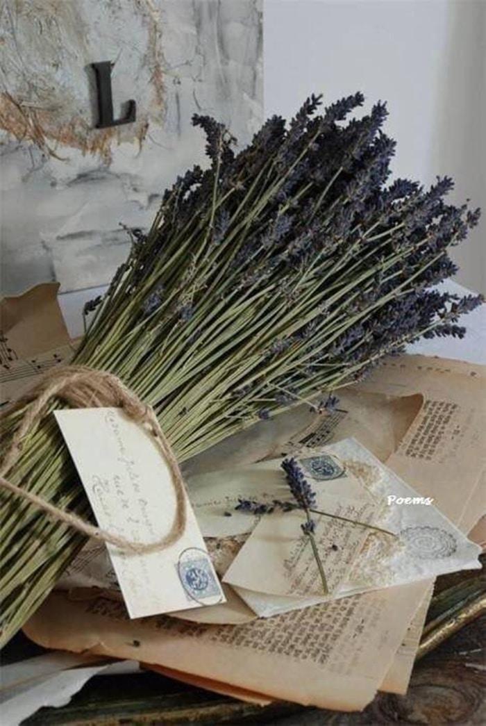 hinh anh cach bao quan hoa lavender kho