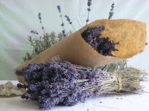 hinh anh cach bao quan hoa oai huong lavender kho