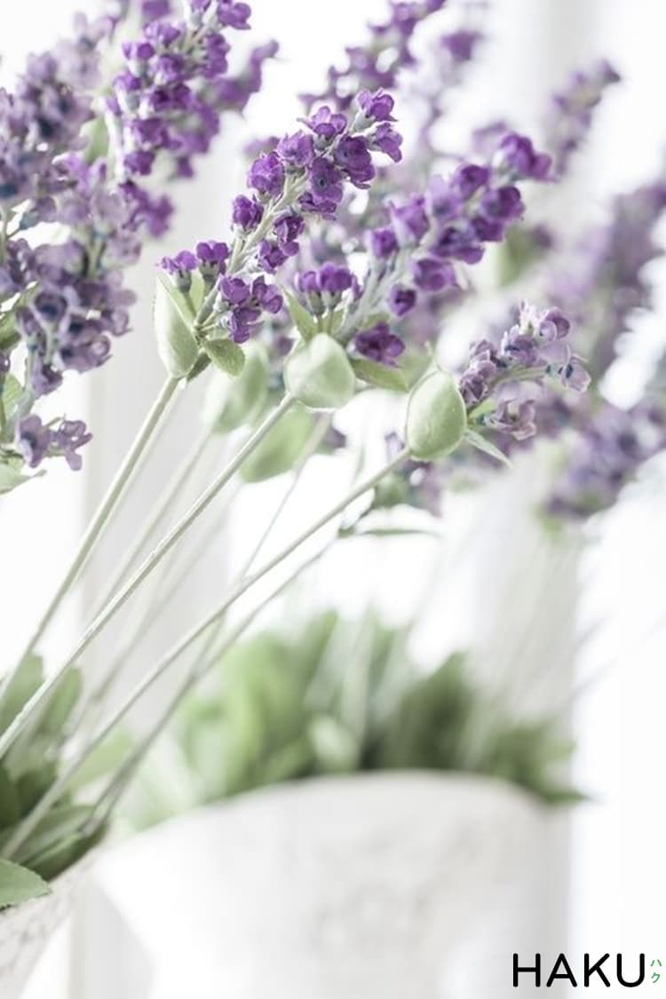 hoa oai huong lavender gia