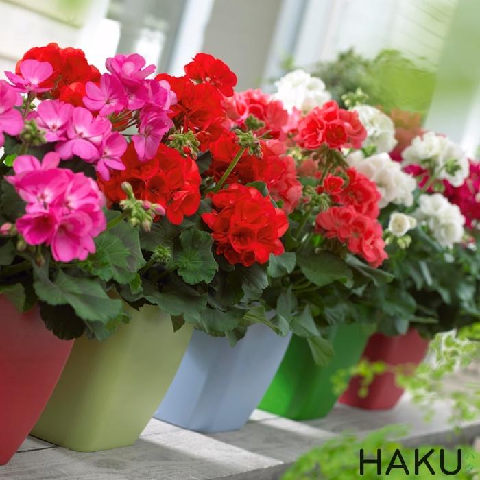 gioi thieu ve hoa phong lu