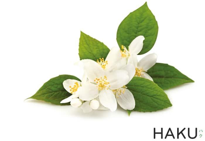 hoa nhai jasmine