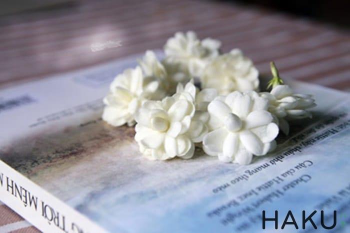 Hinh anh hoa nhai Jasmine dep nhat
