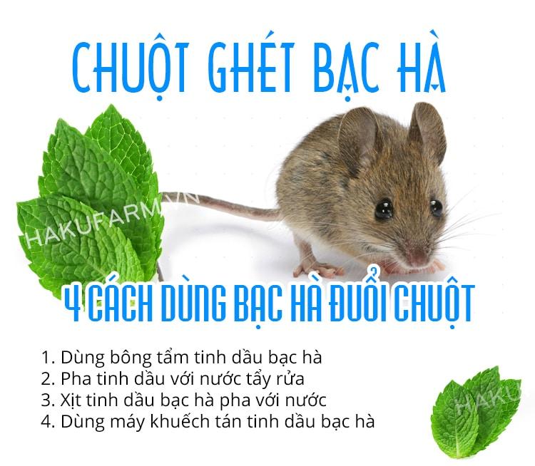 chuot ghet mui bac ha nen dung tinh dau rat hieu qua