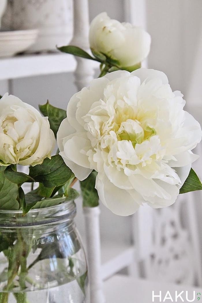 hoa tuoi khu mui phong may lanh