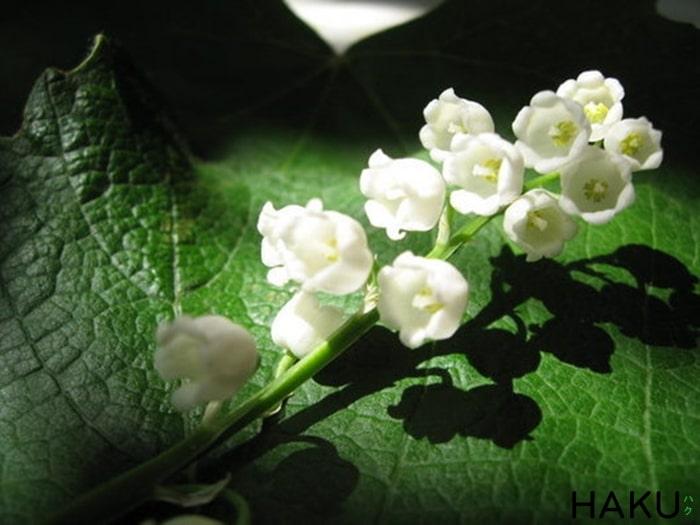 nhung loai hoa co huong thom nhat