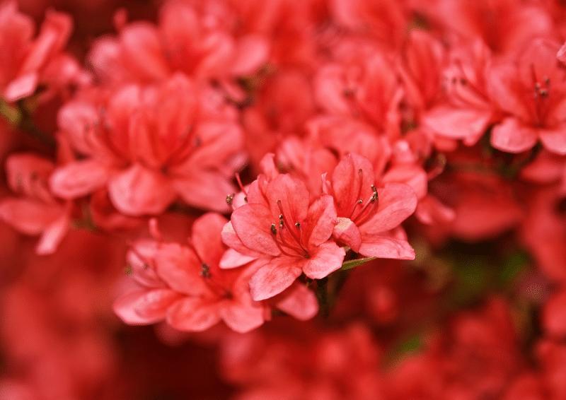 cach trong hoa do quyen